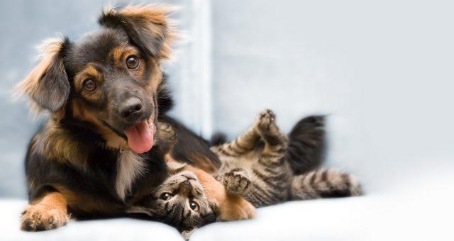 Travailler leur complicité chien/chat